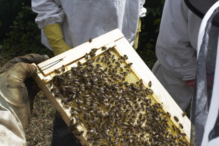 beekeeping in Dorset