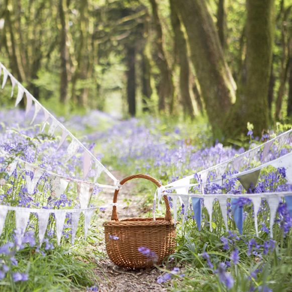 Bluebells and Bunting
